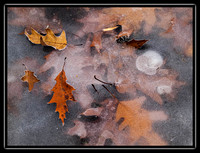 leaves in the ice 4