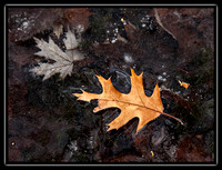 leaves in the ice 6