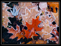 leaves in the ice 5
