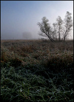 20071028093704 frost and fog 2 (88380505).jpg