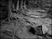 20100302215839 exposed roots (84579193).jpg