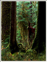20051204142556 hoh rainforest 3 (53292984).jpg